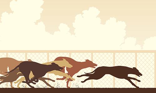 Illustration of racing greyhounds