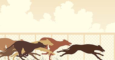 Greyhound racing investigation